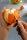 Ingwer- und Orangenschäler MELANSINA